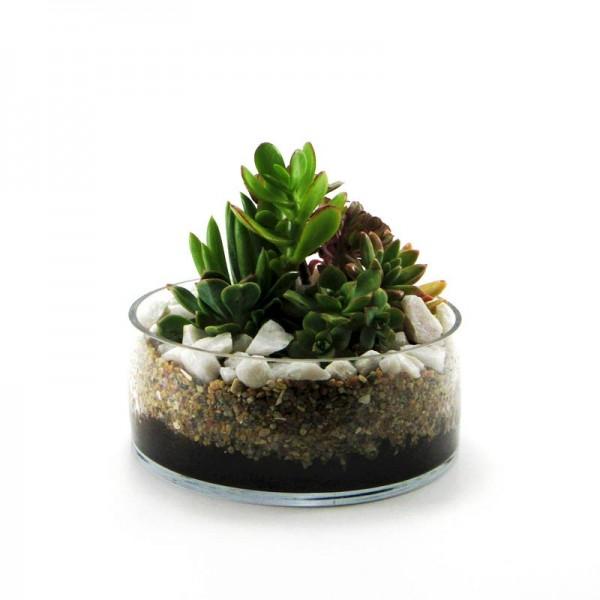 Mini jardín 3