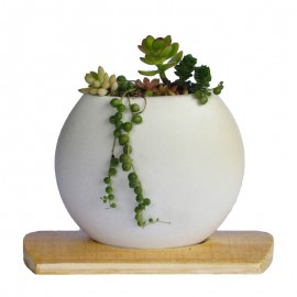 Mini jardín 1