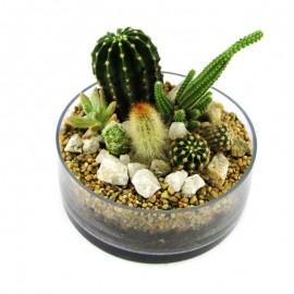 Mini jardín de cactus 2
