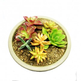 Mini jardín 5